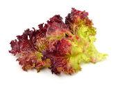 Frische rote salat isoliert auf weiss — Stockfoto