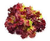 Frische rote salat — Stockfoto