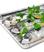 Ryby čerstvé makrely s petrželkou na hliníkové fólie zásobník — Stock fotografie