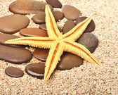 Starfish and pebble on the sand — Stock Photo