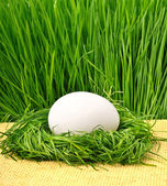 Egg in the green nest against the green grass — Stock Photo