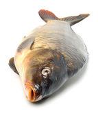 Sazan balığı — Stok fotoğraf