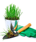 Shovel, rubber gloves and steel pot with green grass  — Stock Photo