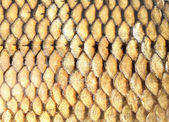 Golden fish scales background — Stock Photo