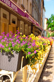 Street in Lvov decorated with flowers in flowerbeds — Stock Photo