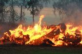 燃烧秸秆 — 图库照片
