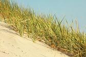 Dune sul mar baltico — Foto Stock