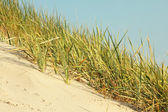Dunes on baltic sea — Stock Photo
