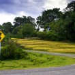 Stock Photo: Tortuous Way to...