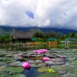 Stock Photo: Lotuses and Mountain.