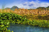 Creek Against Background of the Pinatubo Volcano. — Stock Photo