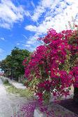 Streets of Samosir Island. — Stock Photo