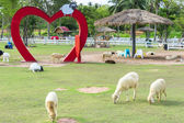 We like Sheeps. Pattaya Sheep Farm. — Foto Stock