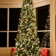 Stock Photo: Christmas tree lit up