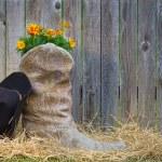 florescência de bota de cowboy e um chapéu — Foto Stock
