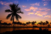 Palm boom silhouetten in hawaï — Stockfoto
