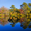 Tree reflections in pond — Stock Photo