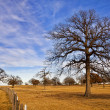 Texas winter sky over scenic trees — Stock Photo