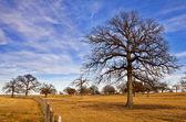 Texas winter sky over scenic trees — Stock Photo
