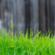 Turf of green grass — Stock Photo