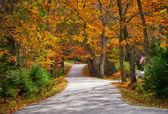 秋天蜿蜒道路 — 图库照片