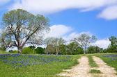 Texas bluebonnet vista along country road — Stock Photo