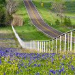 Texas bluebonnets along the road side — Stock Photo