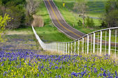 Texas bluebonnets langs de straatkant — Stockfoto