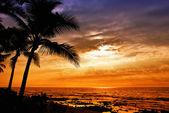 Hawaiian palm tree sunset — Stock Photo