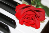 Red rose on piano keyboard — Stock Photo