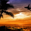 Tropical sunset with palm tree and airplane silhouettes — Stock Photo #31927623