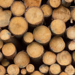 Pile of timber logs — Stock Photo