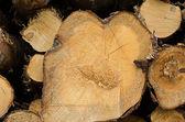 Pile of timber logs, closeup — Stock Photo