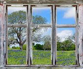 Spring vista with Texas bluebonnets, seen through an old window frame — Stock Photo