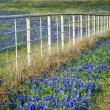 Bluebonnets and white fence — Stock Photo #38820043