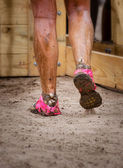 Mud race runner's muddy feet — Stock Photo
