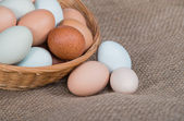 Fresh, colorful chicken eggs in a basket, closeup — Photo