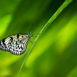 ������, ������: Paper Kite Butterfly
