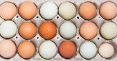 Colorful chicken eggs — Stock Photo