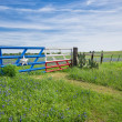 Texas bluebonnet field and fence in spring — Stock Photo #45128241