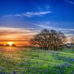Texas bluebonnet field at sunrise — Stock Photo #45128243