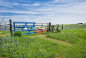 Texas bluebonnet field and fence in spring — Stock Photo