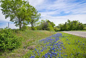Texas bluebonnet along country road — Stock Photo