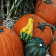 Assorted pumpkins in preparation for Halloween — Stock Photo #14060109