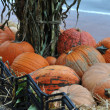 Assorted pumpkins in preparation for Halloween — Stock Photo #14060160