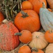 Assorted pumpkins in preparation for Halloween - Foto de Stock