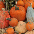 Assorted pumpkins in preparation for Halloween — Stock fotografie