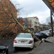 Tree felt down to the ground in the Sheapsheadbay neighborhood due to flooding from Hurricane Sandy - Foto Stock