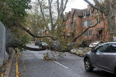 Tree felt down to the ground in the Sheapsheadbay neighborhood due to flooding from Hurricane Sandy — Stock Photo