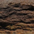 Closeup of rock structure - Stock Photo